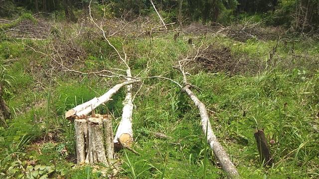"""Gần 1.200ha diện tích rừng """"bị mất"""", kiến nghị chuyển cơ quan điều tra - 2"""