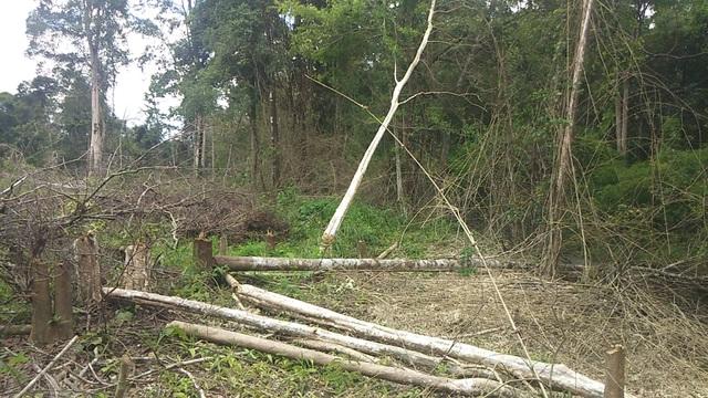 """Gần 1.200ha diện tích rừng """"bị mất"""", kiến nghị chuyển cơ quan điều tra - 1"""