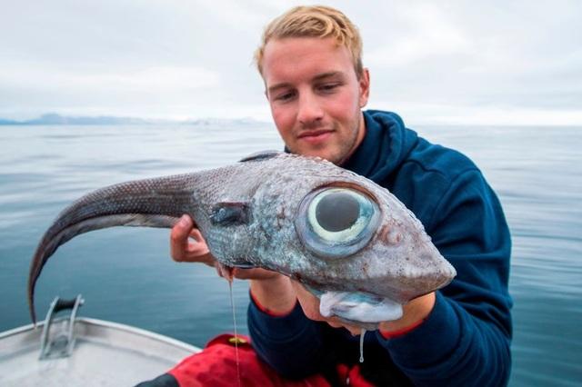 Bắt được cá hiếm có đôi mắt khổng lồ lồi to như bóng đèn - 1