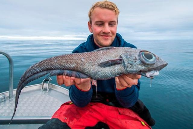 Bắt được cá hiếm có đôi mắt khổng lồ lồi to như bóng đèn - 2