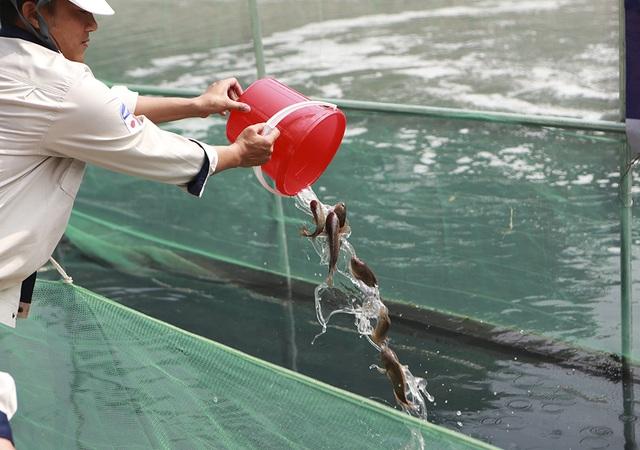 Sáng nay thả cá Koi Nhật Bản xuống sông Tô Lịch và Hồ Tây - 8