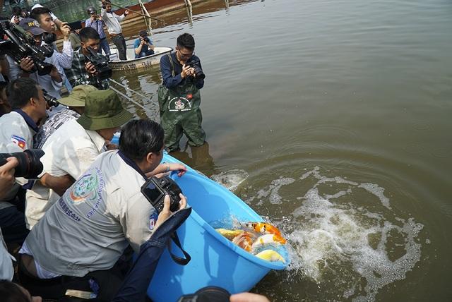 Sáng nay thả cá Koi Nhật Bản xuống sông Tô Lịch và Hồ Tây - 13