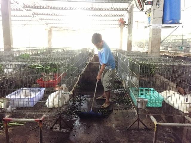 Vớt lục bình trên sông nuôi thỏ,bỏ túi 60 triệu đồng/tháng - 4