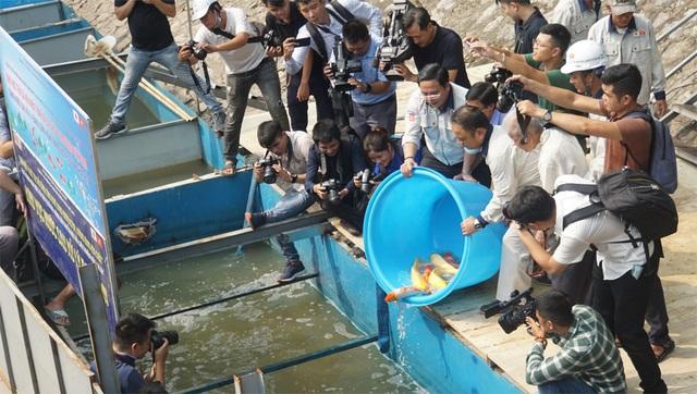 Sáng nay thả cá Koi Nhật Bản xuống sông Tô Lịch và Hồ Tây - 2