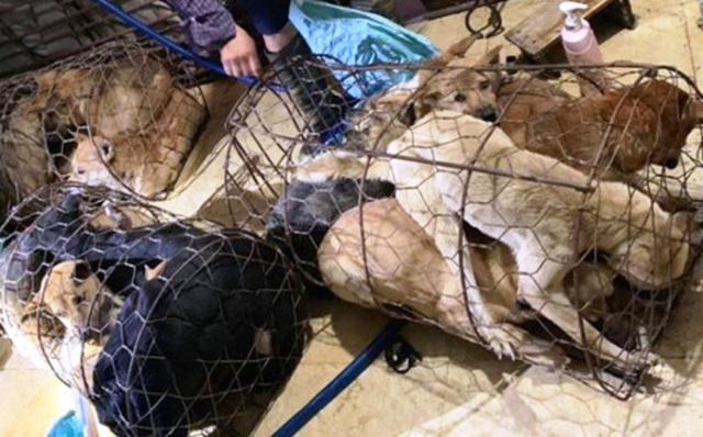 Triệt phá đường dây trộm chó, tiêu thụ khoảng 100 tấn - 1