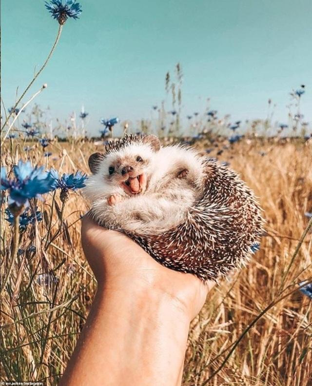 """Mỉm cười theo dõi bộ ảnh của """"chú nhím hạnh phúc nhất thế giới"""" - 2"""