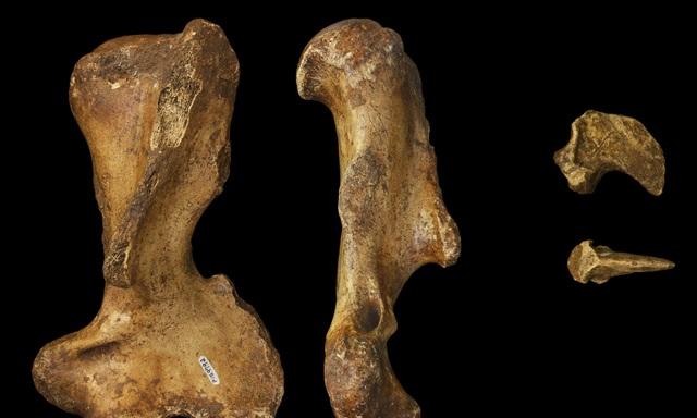 Australia cổ đại là nhà của các loài động vật có túi khổng lồ - 1