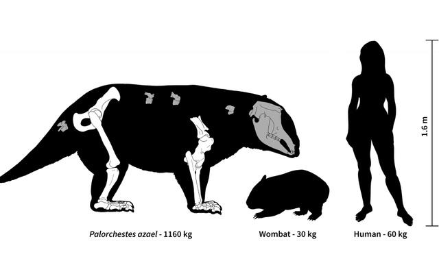 Australia cổ đại là nhà của các loài động vật có túi khổng lồ - 2