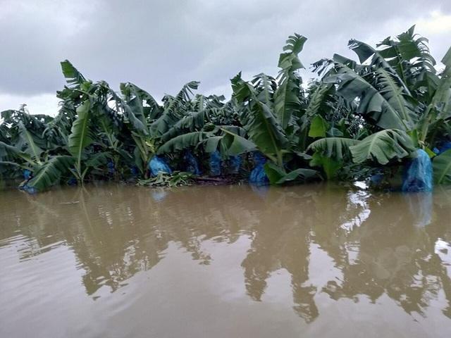 """Dồn sức cho """"canh bài"""" nông nghiệp, bầu Đức nhận tin dữ từ Lào - 2"""