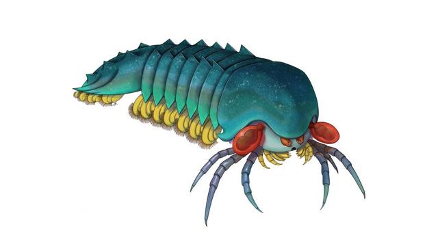 Loài sinh vật ác mộng dưới đáy biển - 1