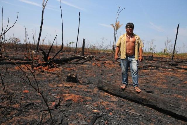 """Thảm cảnh của thổ dân rừng Amazon khi """"lá phổi xanh"""" ngày càng teo nhỏ - 5"""