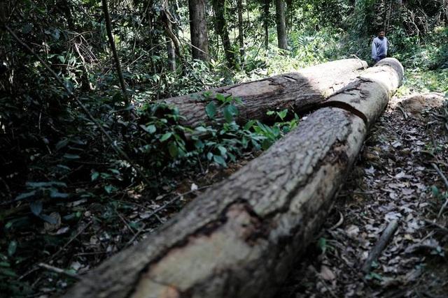 """Thảm cảnh của thổ dân rừng Amazon khi """"lá phổi xanh"""" ngày càng teo nhỏ - 9"""