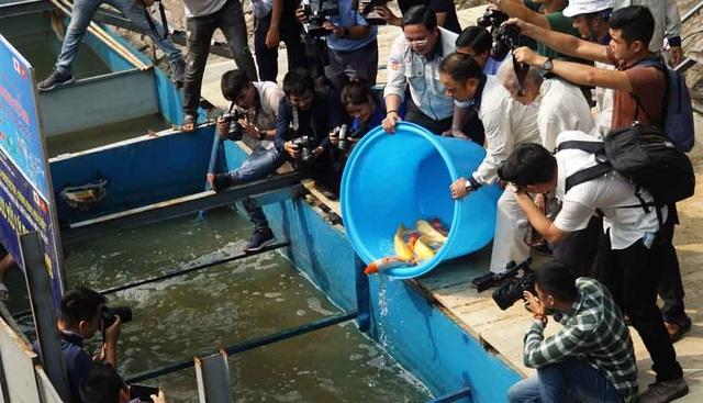 Chuyên gia thủy sản nói gì về việc cá Koi chết ở sông Tô Lịch? - 2