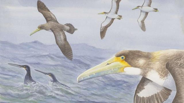 Loài chim cổ nhất thế giới vừa được phát hiện ở New Zealand - 1