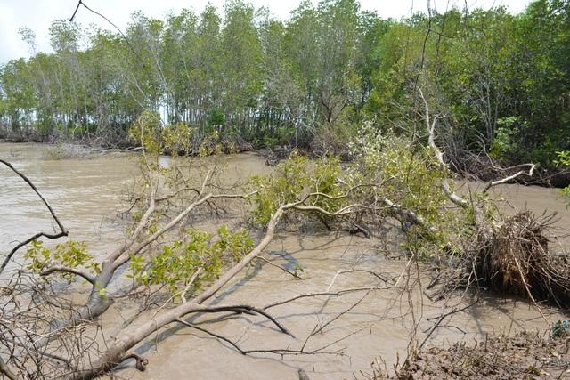 Hết bờ biển Tây, Cà Mau lại ban bố tình huống khẩn cấp sạt lở bờ biển Đông - 1