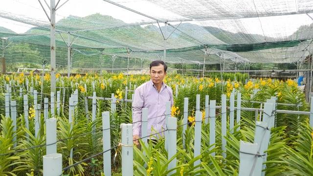 Đưa lan Mokara về miền núi, nông dân Đà Nẵng thu lãi 30 triệu đồng/tháng - 3