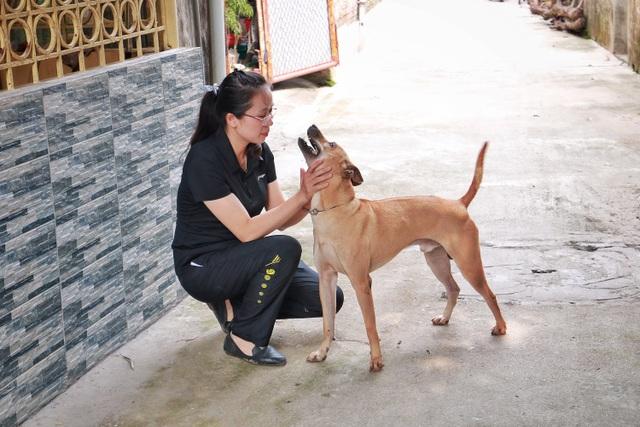 """Chú chó Phú Quốc """"lừng danh"""", trả giá 350 triệu đồng không bán ở Hà Nội - 2"""