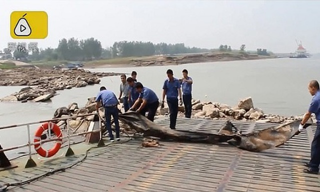 Phơi bày sự thật về quái vật Loch Ness của Trung Quốc - 3