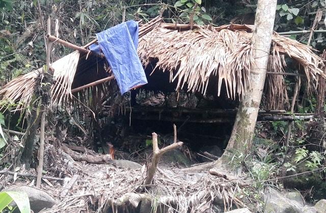 Hàng chục cây gỗ lớn bị đốn hạ ngổn ngang trong rừng tự nhiên - 8