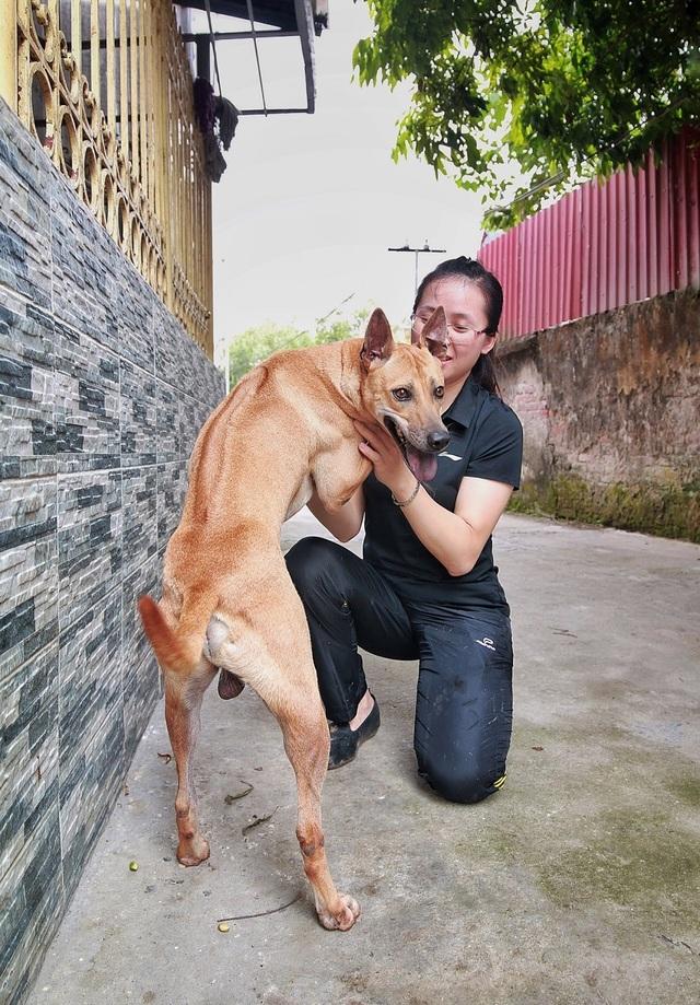 """Chú chó Phú Quốc """"lừng danh"""", trả giá 350 triệu đồng không bán ở Hà Nội - 3"""