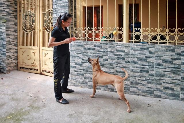 """Chú chó Phú Quốc """"lừng danh"""", trả giá 350 triệu đồng không bán ở Hà Nội - 8"""