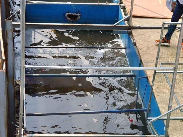 Lắp camera, bố trí người bảo vệ đàn cá Koi Nhật Bản ở sông Tô Lịch - 7