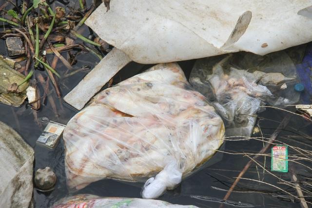 Đà Nẵng: Người dân nuôi cá lồng bè bất chấp lệnh cấm - 4