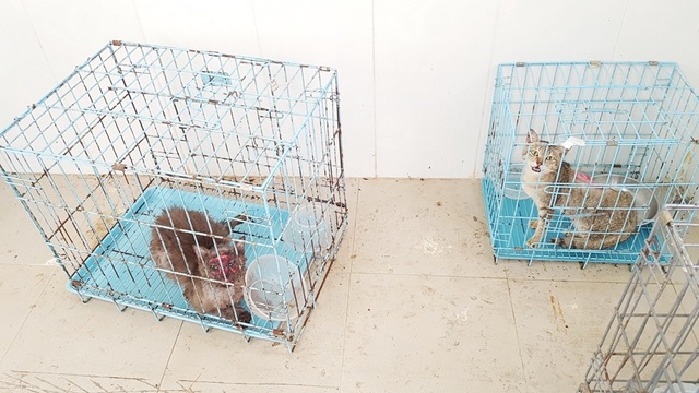 Huế: Tânsinh viên ngành Thú y tò mò xem cách chữa bệnh cho thú cưng - 13