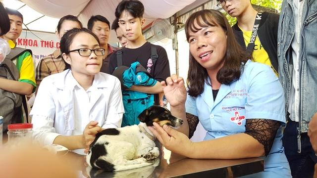 Huế: Tânsinh viên ngành Thú y tò mò xem cách chữa bệnh cho thú cưng - 3