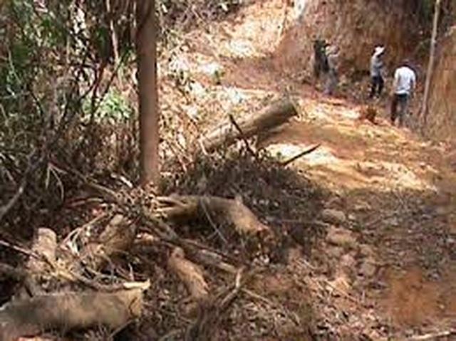 Thừa Thiên Huế: Cán bộ quản lý rừng nghỉ việc để ...chạy xe Grab kiếm sống - 4