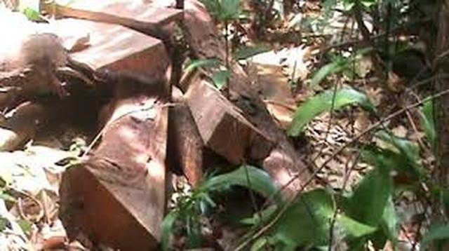 Thừa Thiên Huế: Cán bộ quản lý rừng nghỉ việc để ...chạy xe Grab kiếm sống - 3