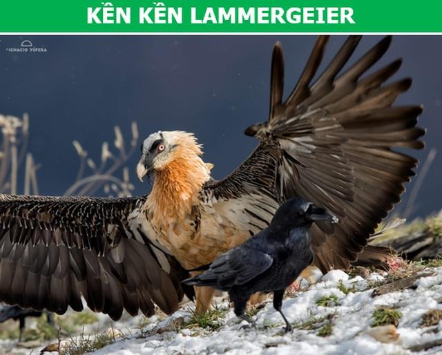 """""""Rợn người"""" với những loài chim nguy hiểm nhất thế giới (P2) - 1"""