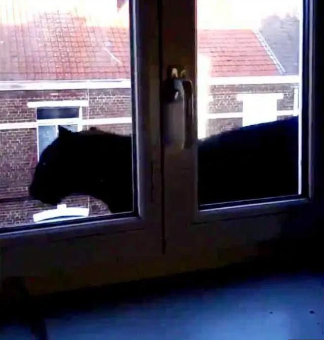 Giật mình báo đen dạo bước trên mái nhà ở Pháp - 4