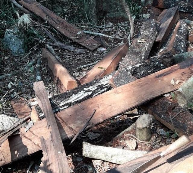 Vụ phá rừng di sản tại Quảng Bình: 7 cán bộ biên phòng bị kỷ luật - 3