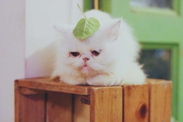 Cô gái Cần Thơ sở hữu nhiều giống mèo độc, lạ - 2
