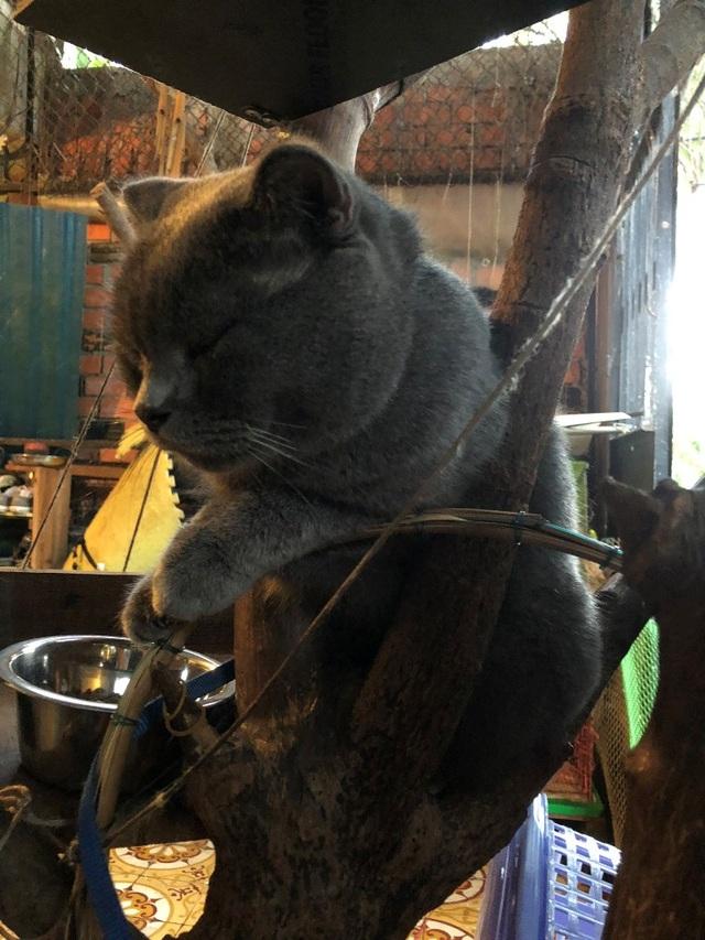 Cô gái Cần Thơ sở hữu nhiều giống mèo độc, lạ - 3