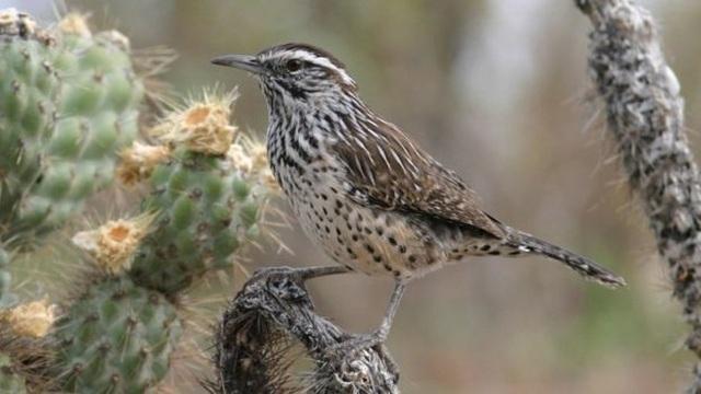Số lượng chim ở Bắc Mỹ và Châu Á giảm hàng triệu con chỉ trong 50 năm - 3