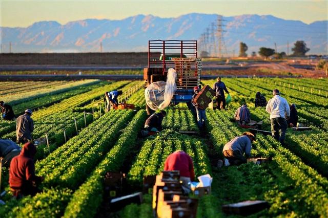 Thực tập – làm việc tại Mỹ theo J1 visa nhà hàng và nông nghiệp - 4