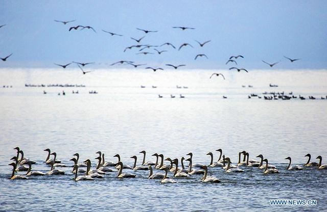 Đảo 1000 năm tuổi đột ngột lộ ra giữa lòng hồ cạn nước - 4