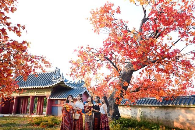 """Giới trẻ Hà Nội nô nức """"check-in"""" ở hàng cây lá phong đỏ đầy lãng mạn - 3"""