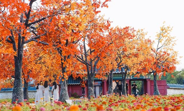 """Giới trẻ Hà Nội nô nức """"check-in"""" ở hàng cây lá phong đỏ đầy lãng mạn - 4"""