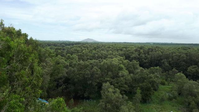 Hoà mình vào thiên nhiên trên cây cầu tình yêu trong rừng tràm Trà Sư - 9