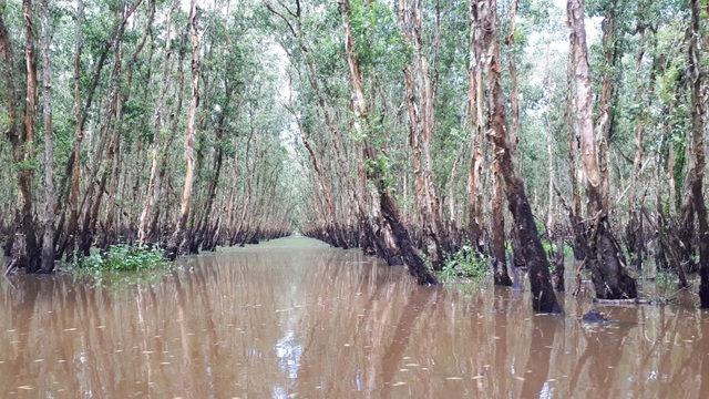 Hoà mình vào thiên nhiên trên cây cầu tình yêu trong rừng tràm Trà Sư - 10