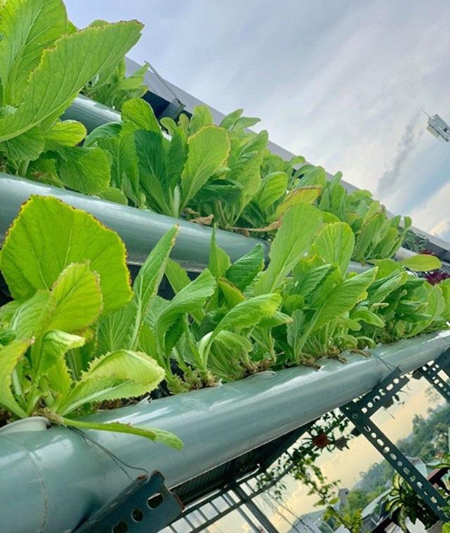 """Vườn rau thủy canh ấn tượng trên sân thượng nhà nữ diễn viên """"Cổng mặt trời"""" - 10"""