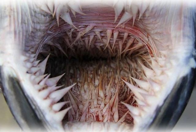 Giải mã chiếc miệng đáng sợ đến khó tin của loài rùa biển? - 1
