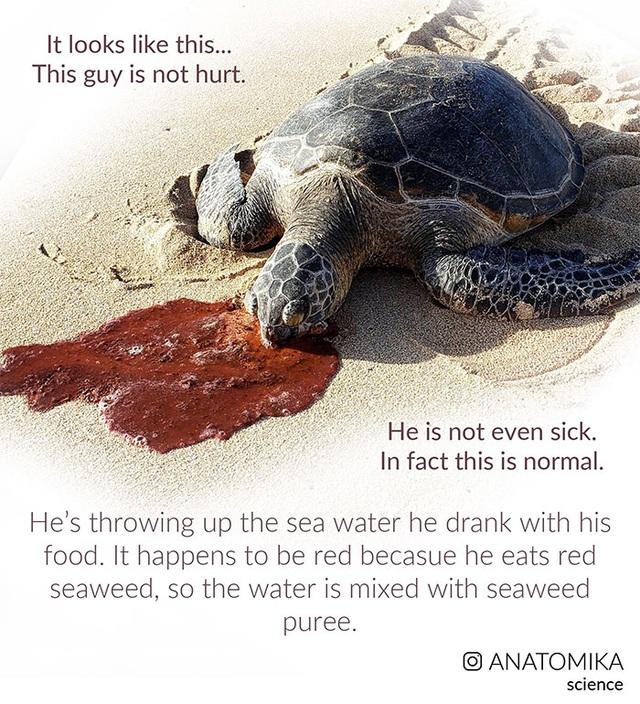 Giải mã chiếc miệng đáng sợ đến khó tin của loài rùa biển? - 4