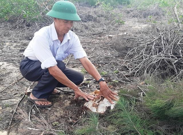 Bình Định: Cả trăm ha rừng dương bao đời che chở cho dân bị… xóa sổ! - 1