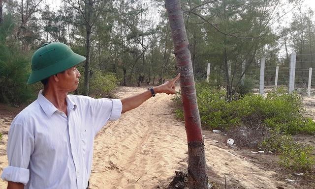 Bình Định: Cả trăm ha rừng dương bao đời che chở cho dân bị… xóa sổ! - 3