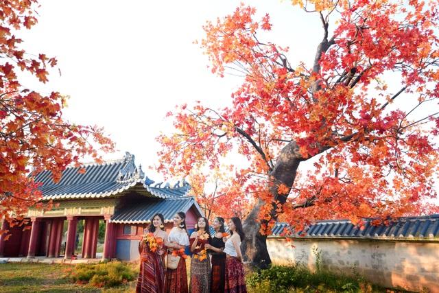 Ngỡ ngàng con đường lá đỏ lãng mạn tựa phim Hàn ở Hà Nội - 5