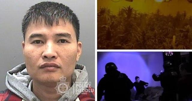 Anh tuyên án nhóm người Việt trồng cần sa quy mô lớn - 2